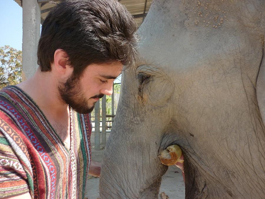 elefantes chiang mai