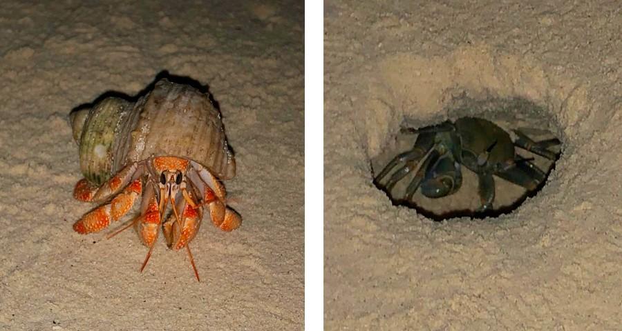 cangrejos y ermitaños en gulhi