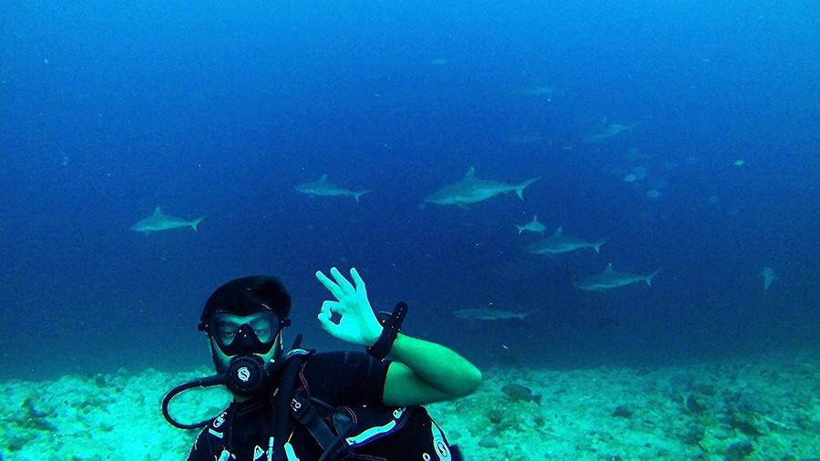 tiburones sharktastic