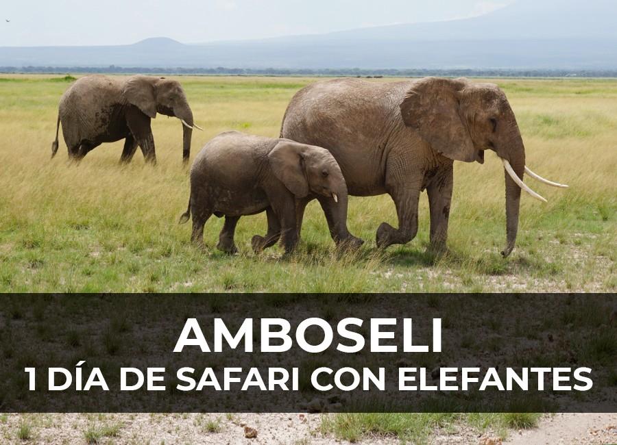 safari amboseli 1 dia elefantes