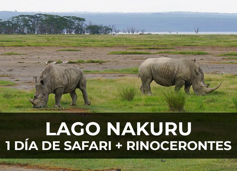 safari lago nakuru 1 dia