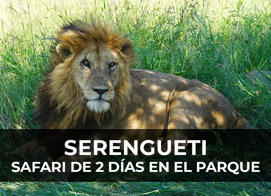 safari serengueti 2 dias