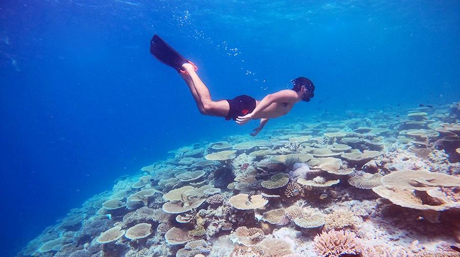coral garden maafushi