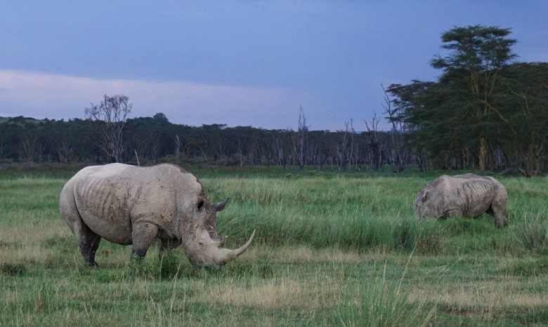 rinoceronte nakuru